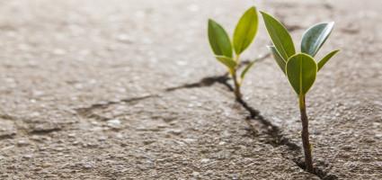 Festgefahrene Strukturen weichen neuem Leben